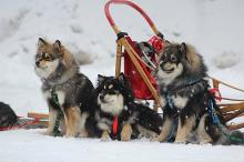 Sledding fun for the whole family