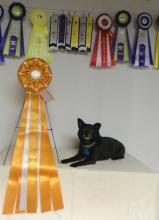 Taco earns his Bronze Award of Merit!